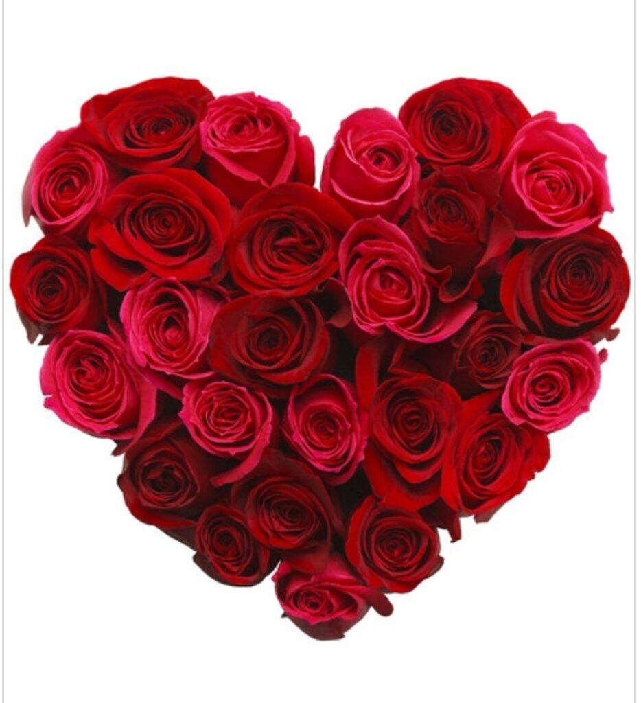 Czerwone róże ułożone na białym tle w kształcie serca